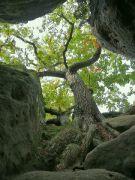 Strom na skále