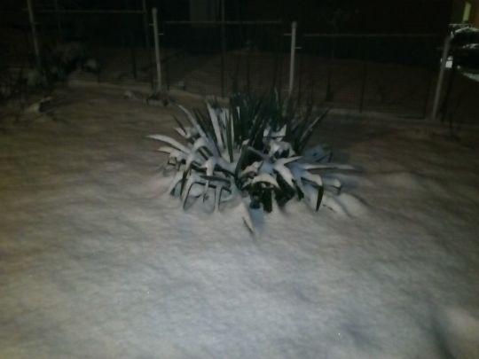Zimní zahrada v noci 13. února 2021