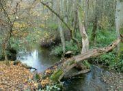 Unětický potok