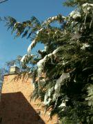 Zimní zahrada odpoledne 15. února 2021