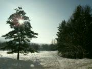 zimní procházka
