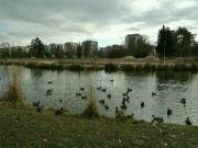 Rybník Zahrádky