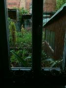 Pohled z okna na exotické květiny