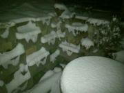 Zimní sníh na zahradě v noci
