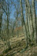 Les pod Medníkem