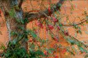Fotomalba darů úrody