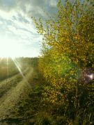 podzimní procházka