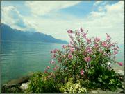 Ženevské jezero V