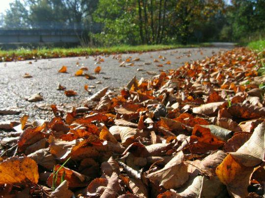 Jizni Cechy - podzim 09