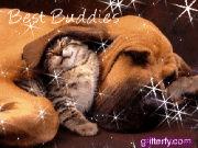 zvirata_979759904_cat_and_dog