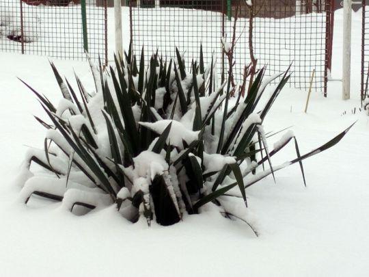 Zimní zahrada pod sněhem 17. ledna 2021