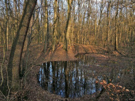 Lesní tůně