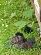pesotovy páchnoucí botky