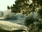 mrzne