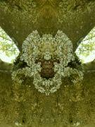 lilie/šamanská maska ?