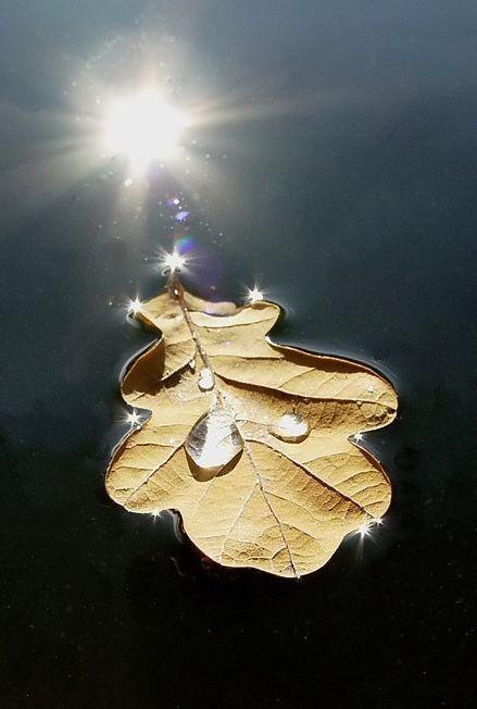 List na vodě