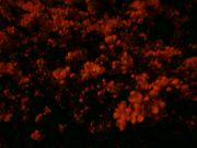 Jabloň v noci: Václav Kovalčík, Zlín