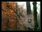 Listopad v lese II