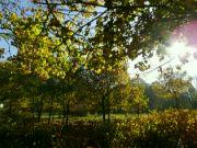 průhled skrze listí
