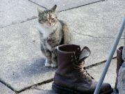 naše kočka