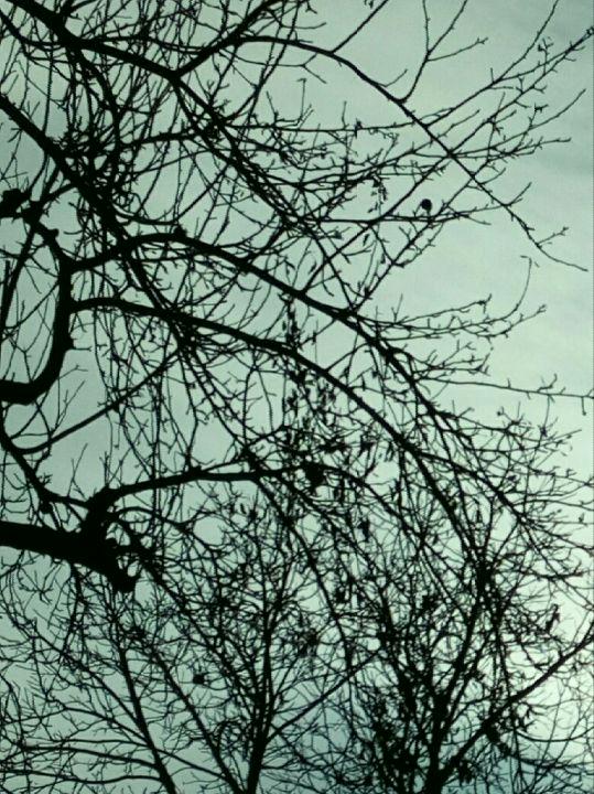Strom a nebe