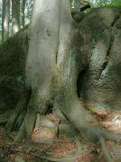 Souboj stromu a kamene