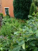 Červnecová zahrada: Václav Kovalčík