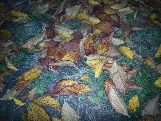 Listí vajgélie v noci: Václav Kovalčík