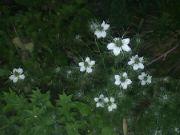 Kvetoucí černucha: Václav Kovalčík, Zlín