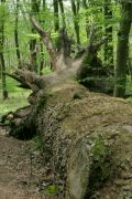 Padlý velikán