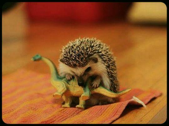 Jak vymřeli dinosauři