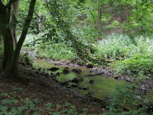 Milešovský potok