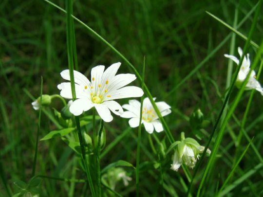 Jarni kvety