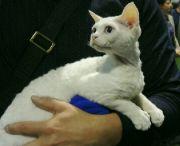 Kočka 8