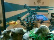 V akváriu