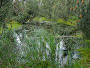 Rašeliniště Černé bahno-Topielisko