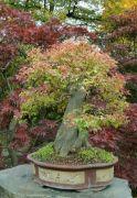 Podzimní Japonská zahrada