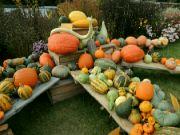 Tajuplný dýňový podzim