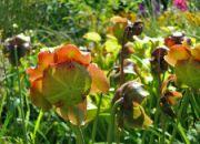 Botanická zahrada Teplice