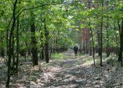 Smíšený les