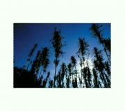 outdoor_mix_ss