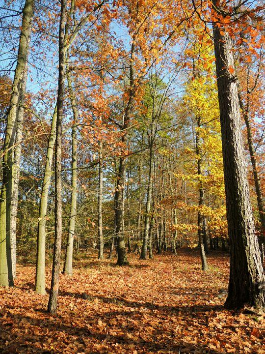 Podzimní les