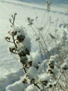 zima s ledovými krystaly