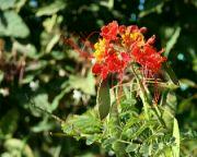 Okrasná rostlina