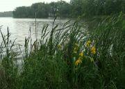 Vlkovský rybník