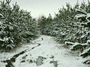 Zima v polabí