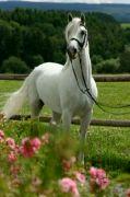 můj koník