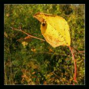 Barevný podzim II