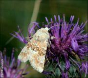 motýl neučeno