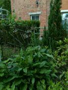 Červnová zahrada